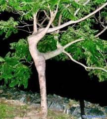 dancing-tree-illusion